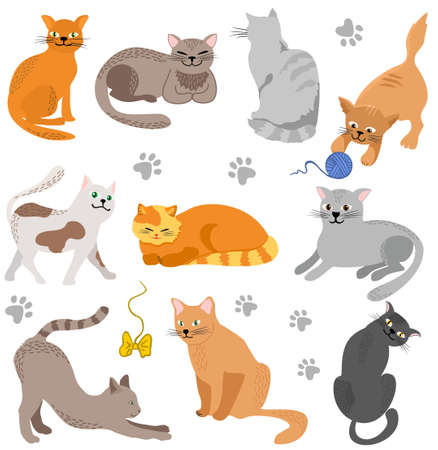 Vector Cute cats. Set characters. Cat different breeds pet characters set. 矢量图像