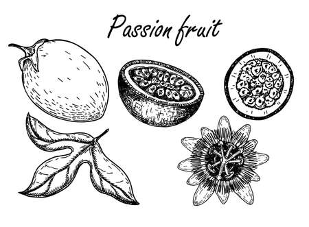 Passion fruit vector drawing set. Sketch passionfruit with slices. Hand drawn tropical food illustration. Engraved summer passionfruit objects. Whole and sliced maracuya. Botanical vintage sketch.