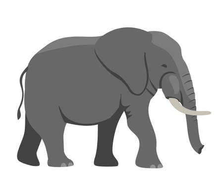 Walking Elephant simple vector Illustration. Big gray african elephant with white tusks. Vector illustration, flat design element, cartoon style. Isolated on white background.
