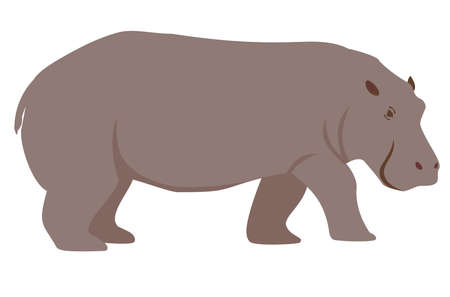 Color illustration of a hippopotamus. Cartoon illustration of a hippopotamus. Isolated vector object on white background. Funny animal character 矢量图像