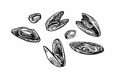 Mussels ink sketch. Seafood, a set of templates for menu design, packaging, restaurants and catering. Isolated on white background. Hand drawn vector illustration. Retro style.
