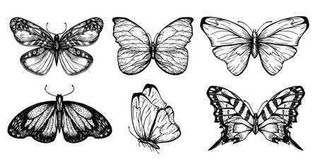 Collection of butterfly drawings for your design. Hand drawn sketch set of insects. Monochrome image of butterflies. Vector sketch.
