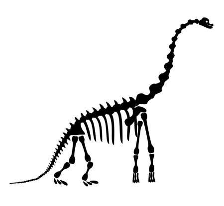 Diplodocus skeleton. Ancient prehistoric animal dinosaur. Big animal of the prehistoric Mesozoic era. Illustration, drawing, engraving, ink, line art. Vector illustration in cartoon style.