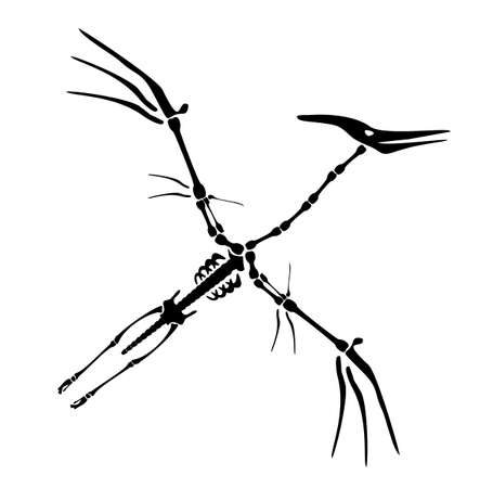 Vector Dinosaur Pterodactyl Skeleton. Primeval fauna, Cretaceous Period. Huge zhenyuanopterus theropod. Flying pterosaur or pterodactyl dino. Silhouette illustration isolated