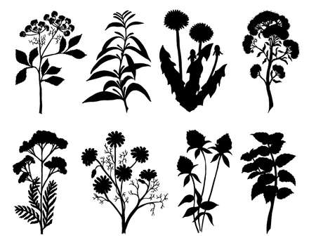 Set of silhouette by herbs and flowers, hand drawn sketch. Medicinal and tea herbs silhouettes. Black silhouettes of meadow wild herbs. Vector illustration.