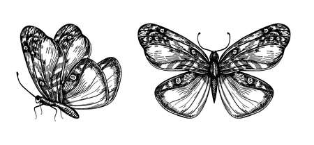Set of vector hand drawn butterflies for design Vector hand illustration of butterflies with open and folded wings