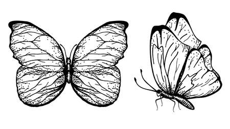 Vector hand drawn illustration of butterflies with open and folded wings Sketch