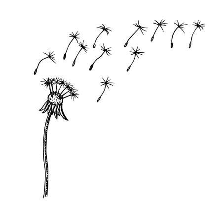 Flying dandelion seeds vector illustration Vector Dandelion blowing silhouette