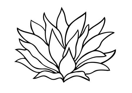 Lotus flowers. Vector illustration. Tropical flower Linear drawing. Vector black and white image. Template for coloring books. Botanical illustration.