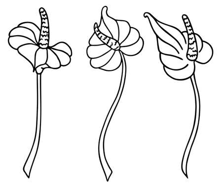 Calla lily flower. For decorating wallpapers, walls, decor, paintings, icons, modern tattoos, prints, prints. Hand drawn vector illustration in line art style, isolated on a white background.