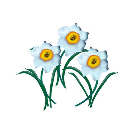 spring flower narcissus isolated on white background, illustration Illustration