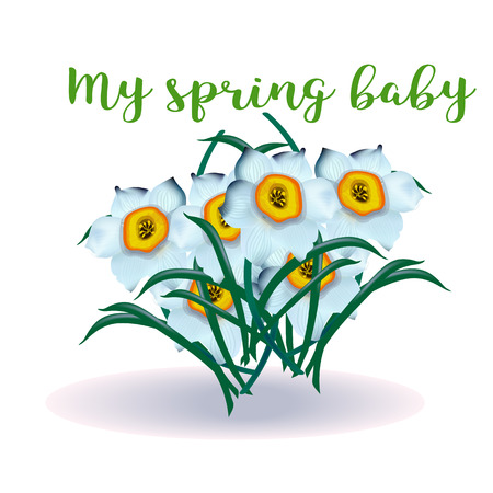spring flower narcissus for newborn, vector
