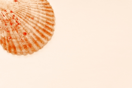 Sea Shell isolated on retro background Stock Photo - 17425456