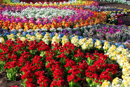 flowerses: varicoloured artificial flowerses planted on soil Stock Photo