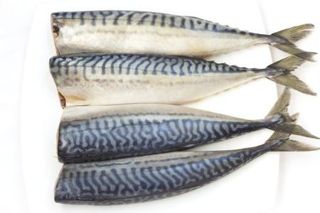 purified: four purified mackerel on a white plate