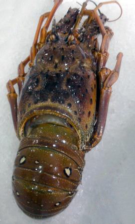 langouste: Lobster