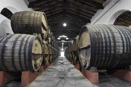 Vineyard and wooden barrels