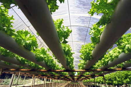 Planting hydroponics