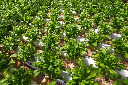 cultivable: Planting hydroponics
