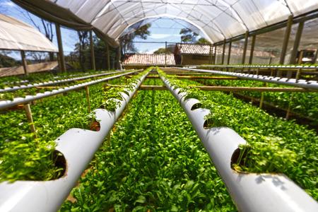 hydroponics: Planting hydroponics