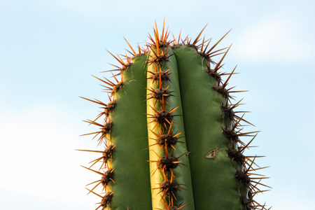 prickly flowers: Cacti are part of the restinga vegetation in the city of Cabo Frio, in the state of Rio de Janeiro, Brazil. The vegetation consists of cacti, bromeliads, flowers and prickly plants with gnarled branches. Stock Photo