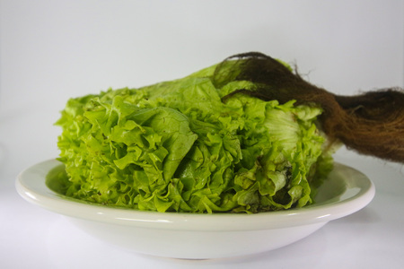 expiration date: Hydroponic lettuce rotten. Food with expired expiration date. Lettuce deteriorated by the action of fungi and bacteria.