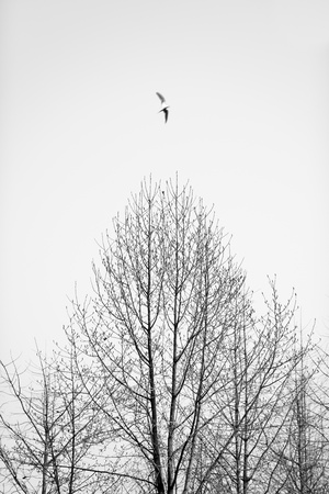 bare trees Stock Photo - 18030327