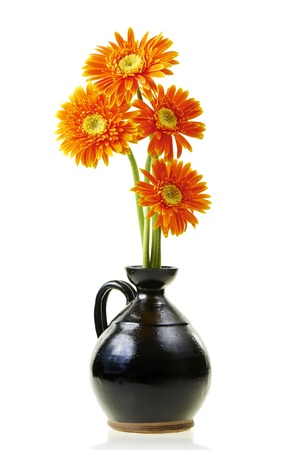 barberton daisy Stock Photo - 21732077