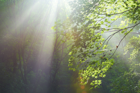 Forest in the sun