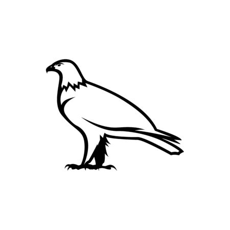 eagle vecotr illustration
