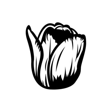 Vintage black and white blooming tulips concept on white background isolated Floral botanical flower. Wild spring leaf wildflower vector illustration. tulip element Idea for business visit card, typography vector, print for t-shirt. Illustration
