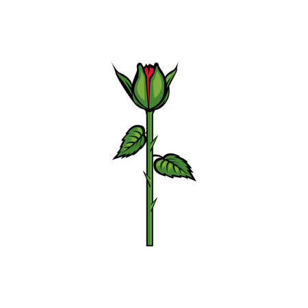 Vintage red blooming rose concept on white background isolated Floral botanical flower. Wild spring leaf wildflower vector illustration. Roses element Idea for business visit card, typography vector, print for t-shirt.