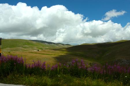 plateau of flowers: Gran Sasso plateau Stock Photo