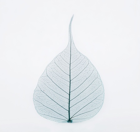 Blue leaf photo