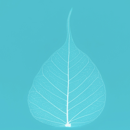 flower structure: White leaf on blue Stock Photo