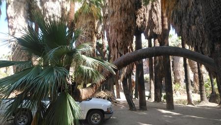 Dense Palm Trees