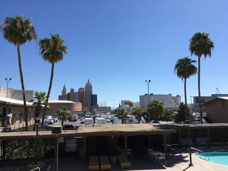 Las Vegas Skyline with Palm Trees