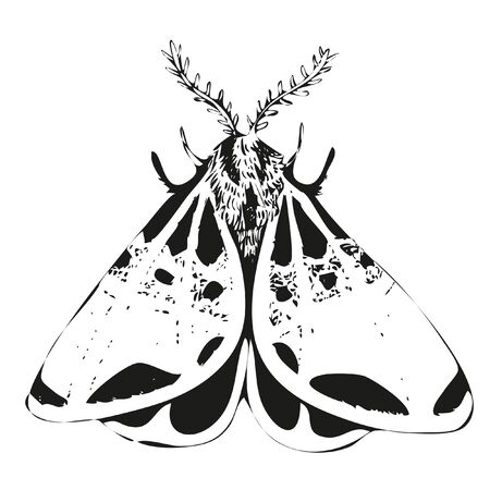 Vector mystic vintage black ink moth, butterfly