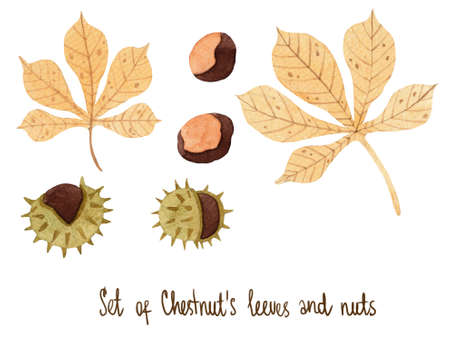Watercolor set with tender chestnut leaves with nuts