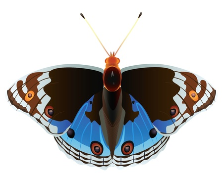 Abstract exotic butterfly