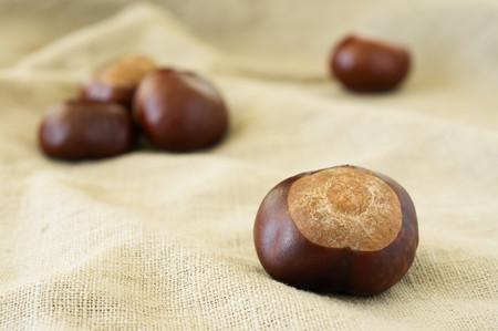 beige: Chestnut close-up on beige cloth Stock Photo