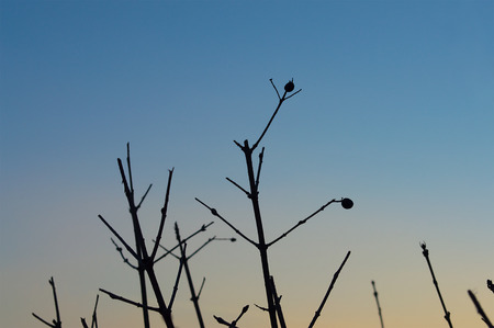 solitariness: Dry plant silhouette