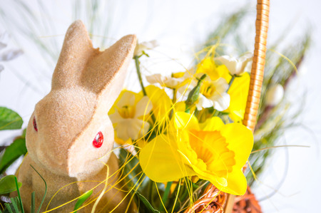 lop eared: Easter rabbit Stock Photo