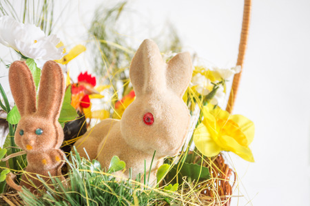 lop eared: Easter rabbits and chicken
