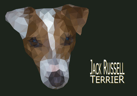 jack russell: Jack Russell Terrier head low poly vector illustration