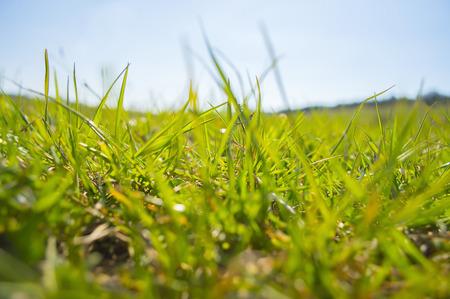 meadow  grass: Verde brillante prado de primavera vista hierba primer plano