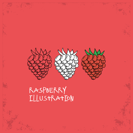 crafted: Cartoon Style Raspberry Illustration - Detailed Crafted Hand Drawn Doodle Colored Sketch - Graphic and Infographic and Food Resource from Healthy Fruit Collection - Vector Illustration