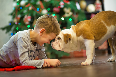 christmas spending: Best friends handsome blond boy and puppy red white english bulldog enjoying spending time with each other close to Christmas tree on red carpet mat. Dog wearing deer cornuted.