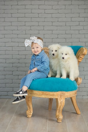 Portrait of blond baby girl playing with husky poppy.Model girl with blond hair posing in studio shoot with sammy white puppy while sitting on retro royal blue chair wearing jeans