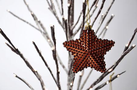 christmas star: Stella di Natale  Archivio Fotografico